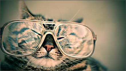 Cat in glasses